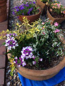緑のマーケットで買った花の寄せ植え2