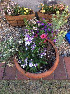 緑のマーケットで買った花の寄せ植え3